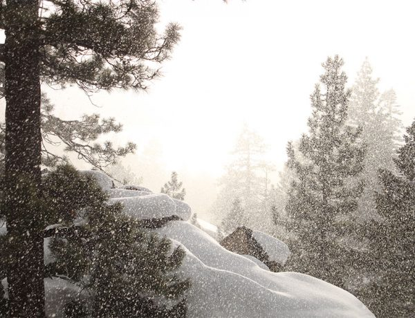 winter snow trees lake tahoe