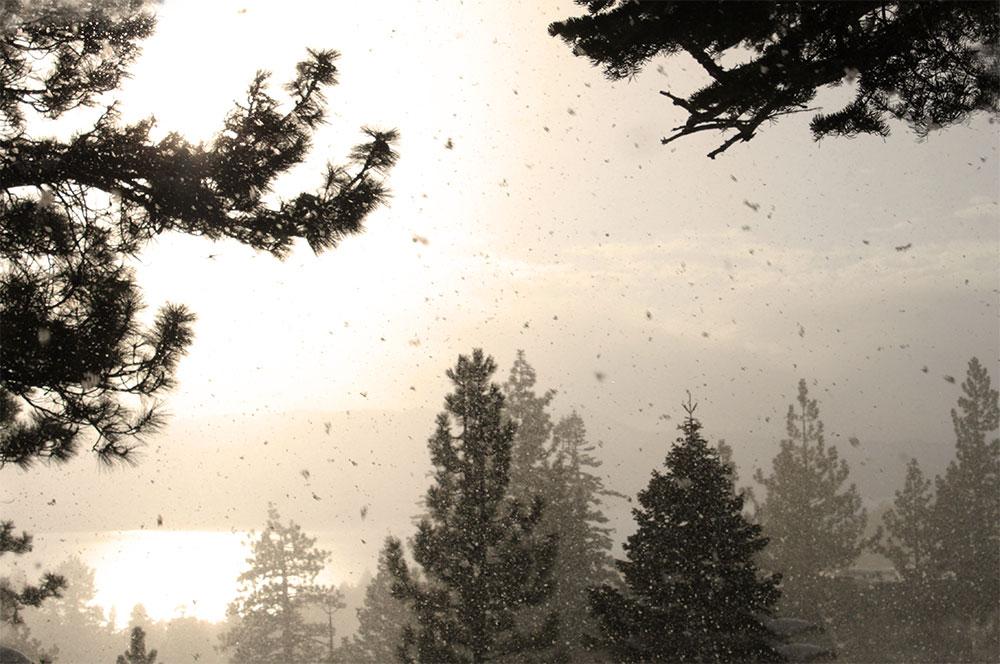 snow flake lake tahoe